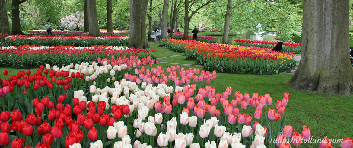 frequently asked questions about keukenhof