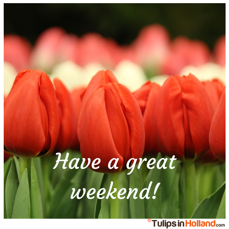 Have a great weekend with tulips tulips in holland tulipsinholland.com