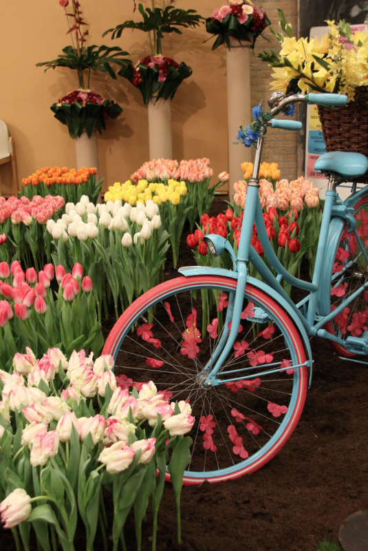 Tulips and bike on Flower festival tulips in holland tulipsinholland.com