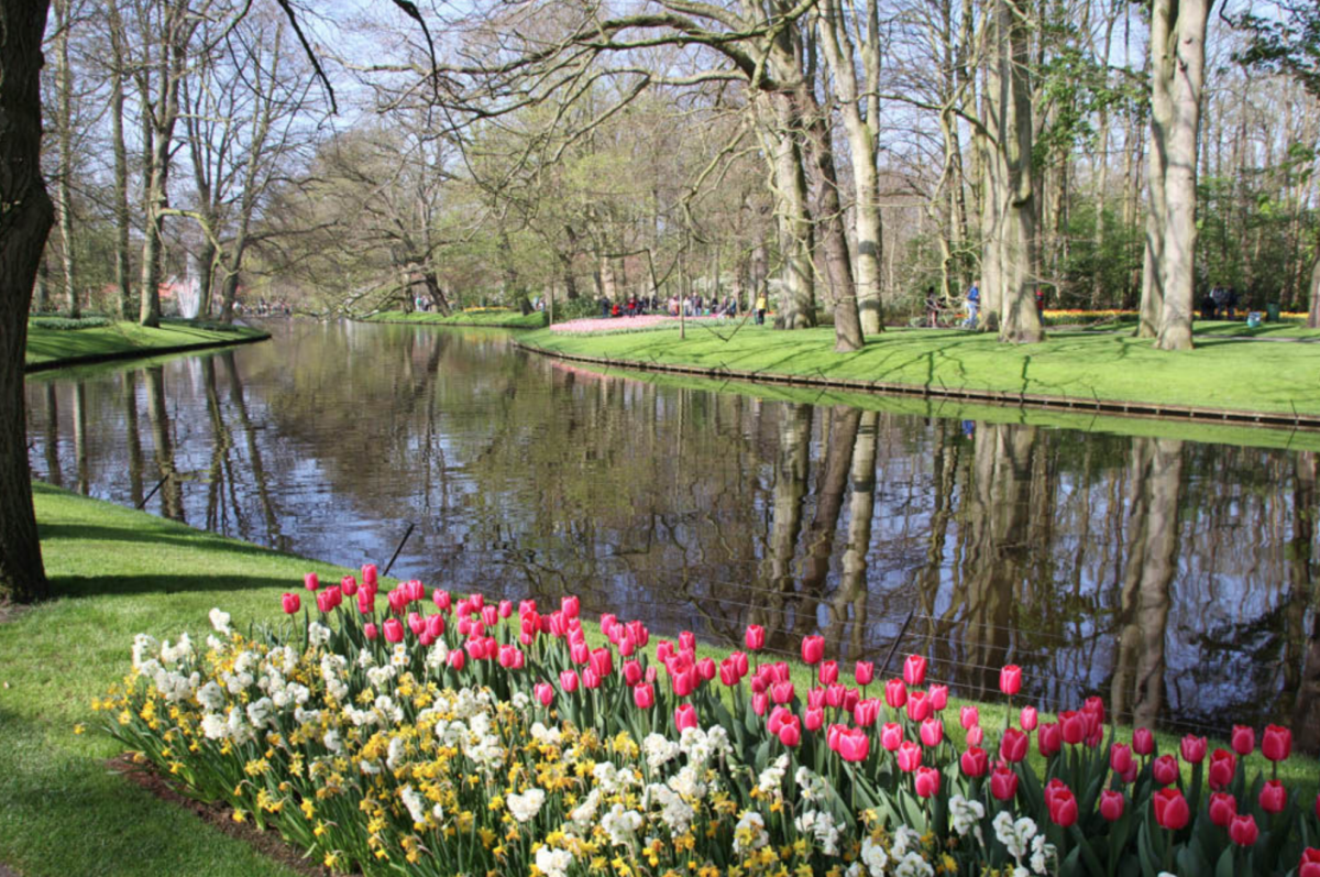Tulip along water at Keukenhof tulips in holland tulipsinholland.com
