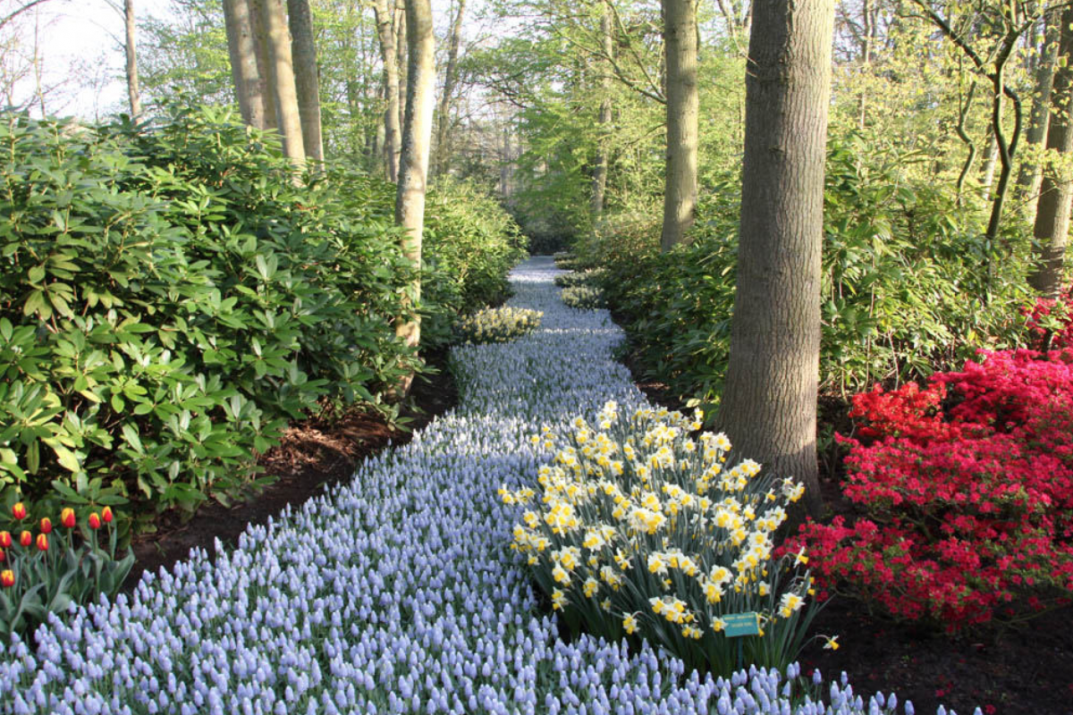 Stream of flowers at keukenhof tulips in holland tulipsinholland.com