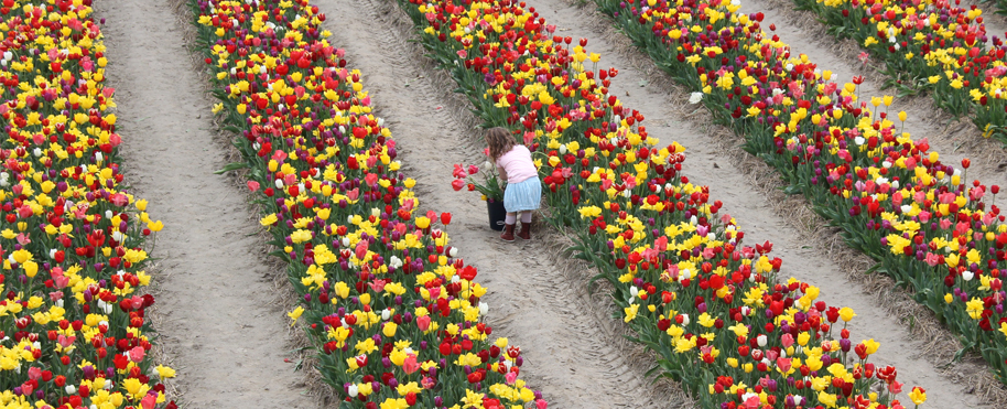 colorful flower fields with girl and tulips in holland tulipsinholland.com