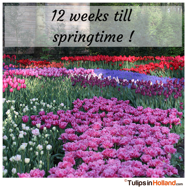 Countdown 12 weeks till springtime tulips in holland tulipsinholland.com