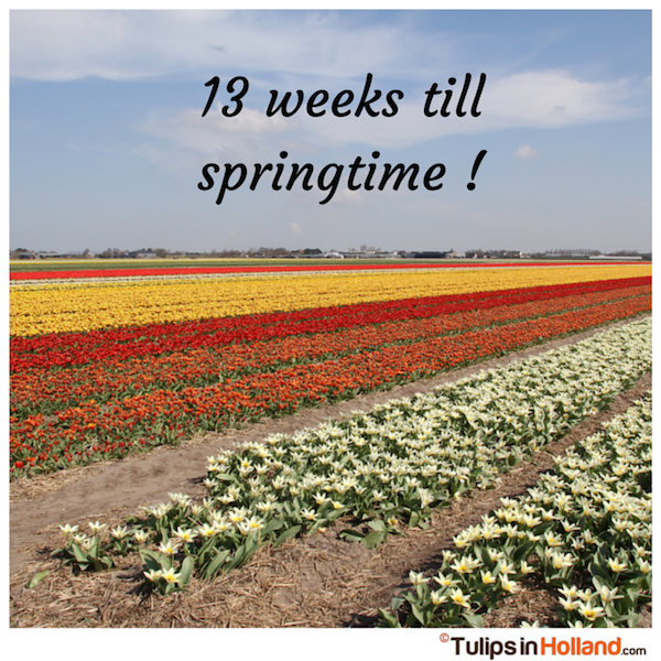 Countdown 13 weeks till springtime tulips in holland tulipsinholland.com