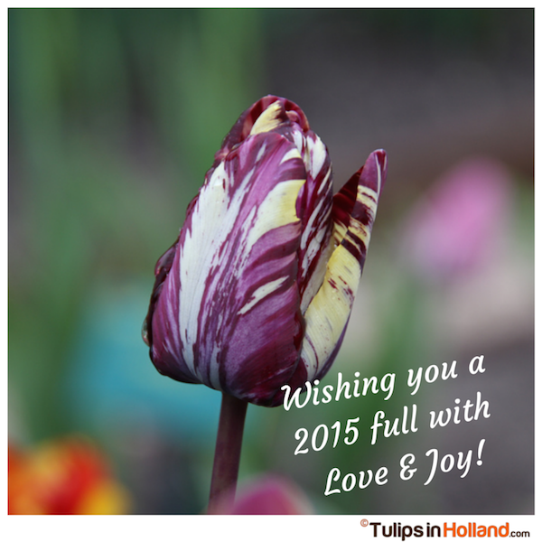 Happy 2015 tulips in holland tulipsinholland.com