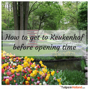 How to get to Keukenhof early before opening time tulips in holland tulipsinholland.com