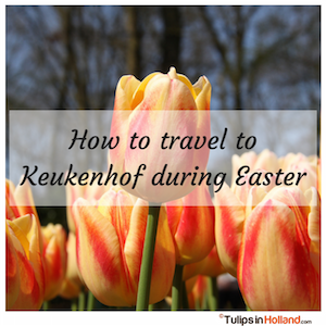 How to travel to Keukenhof during Easter tulips in holland tulipsinholland.com