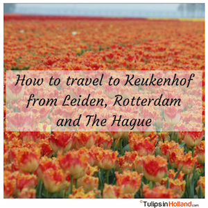 How to travel to Keukenhof from Leiden Rotterdam the Hague tulips in holland tulipsinholland.com