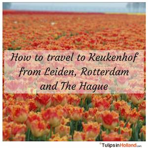 How to travel to Keukenhof from Leiden Rotterdam the Hague tulips in holland tulipsinholland.com