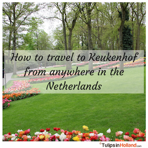 How to travel to Keukenhof from anywhere in the Netherlands tulips in holland tulipsinholland.com