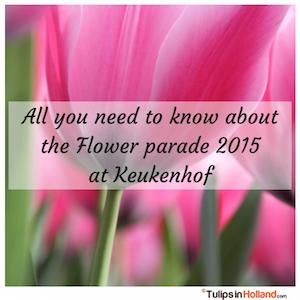 Keukenhof Flower parade 2015 tulips in holland tulipsinholland.com