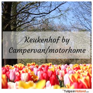 Traveling to Keukenhof by Campervan motorhome tulips in holland tulipsinholland.com