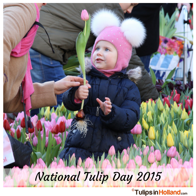 National Tulip Day 2015 Tulips in Holland tulipsinholland.com 1