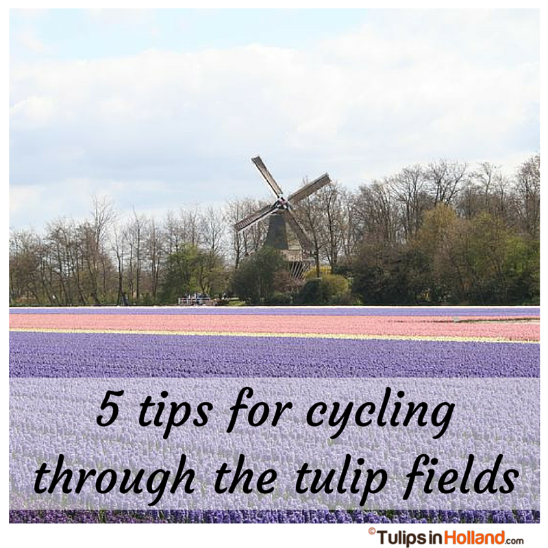 Home Netherlands Tulip Fields Map 5
