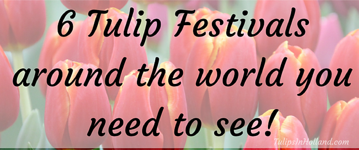 6 Tulip festivals around the world you need to see