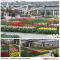 Keukenhof March 18th 2015 tulipsinholland.com 3