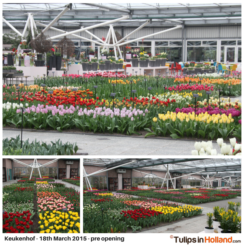 Keukenhof March 18th 2015 tulipsinholland.com 3