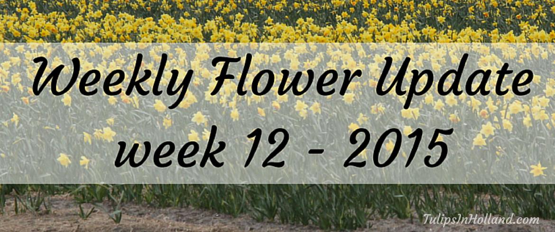 Weekly flower update Week 12
