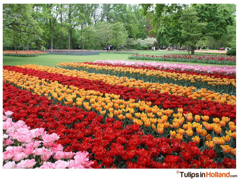 holland tulip festival dates