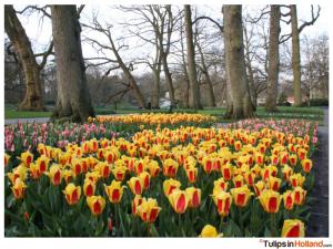 Keukenhof April 11st 2015 tulipsinholland.com 9