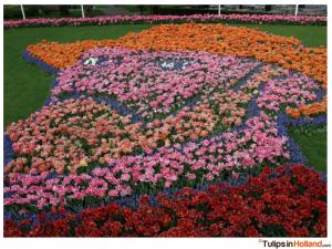 May 2015 tulips in holland tulipsinholland.com 5