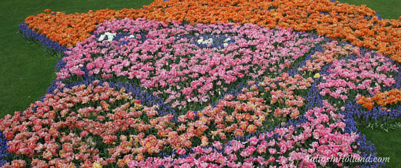 Weekly flower update week 20