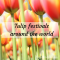 tulips in holland tulip festival around the world