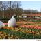 Winners tulips in holland tulipsinholland.com 24