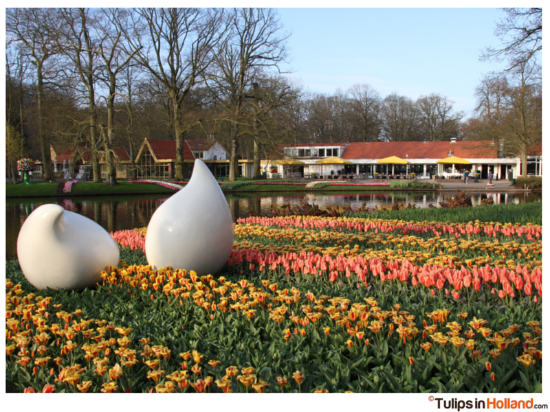 Winner tulips in holland tulipsinholland.com 24