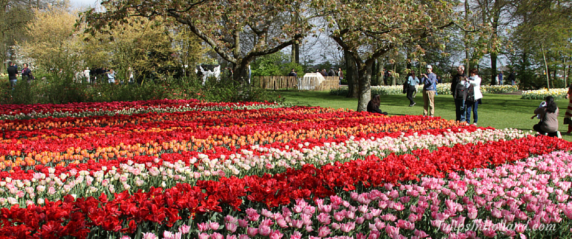 best time to visit keukenhof