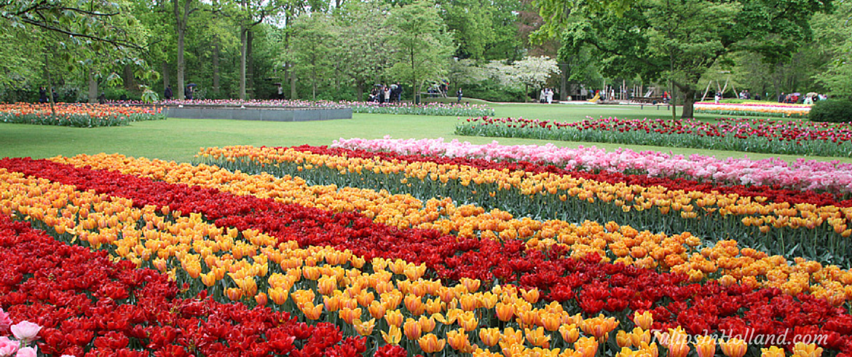 hotels near keukenhof tulips in holland