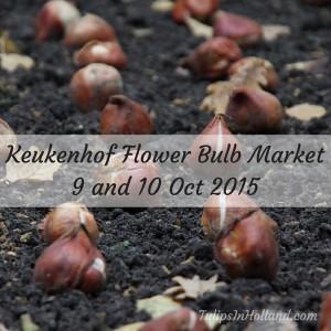Keukenhof flower bulb market 2015 tulipsinholland.com