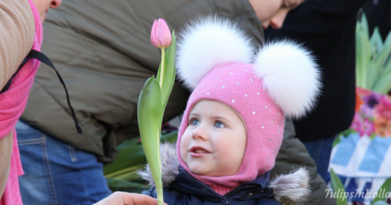 National tulip day 2016 amsterdam