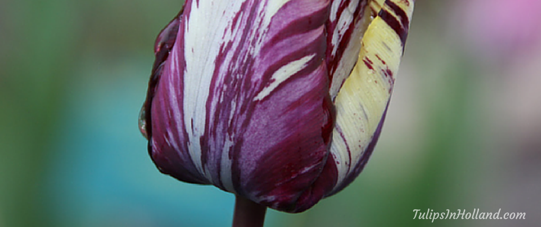 Winner of the tulip awards 2016