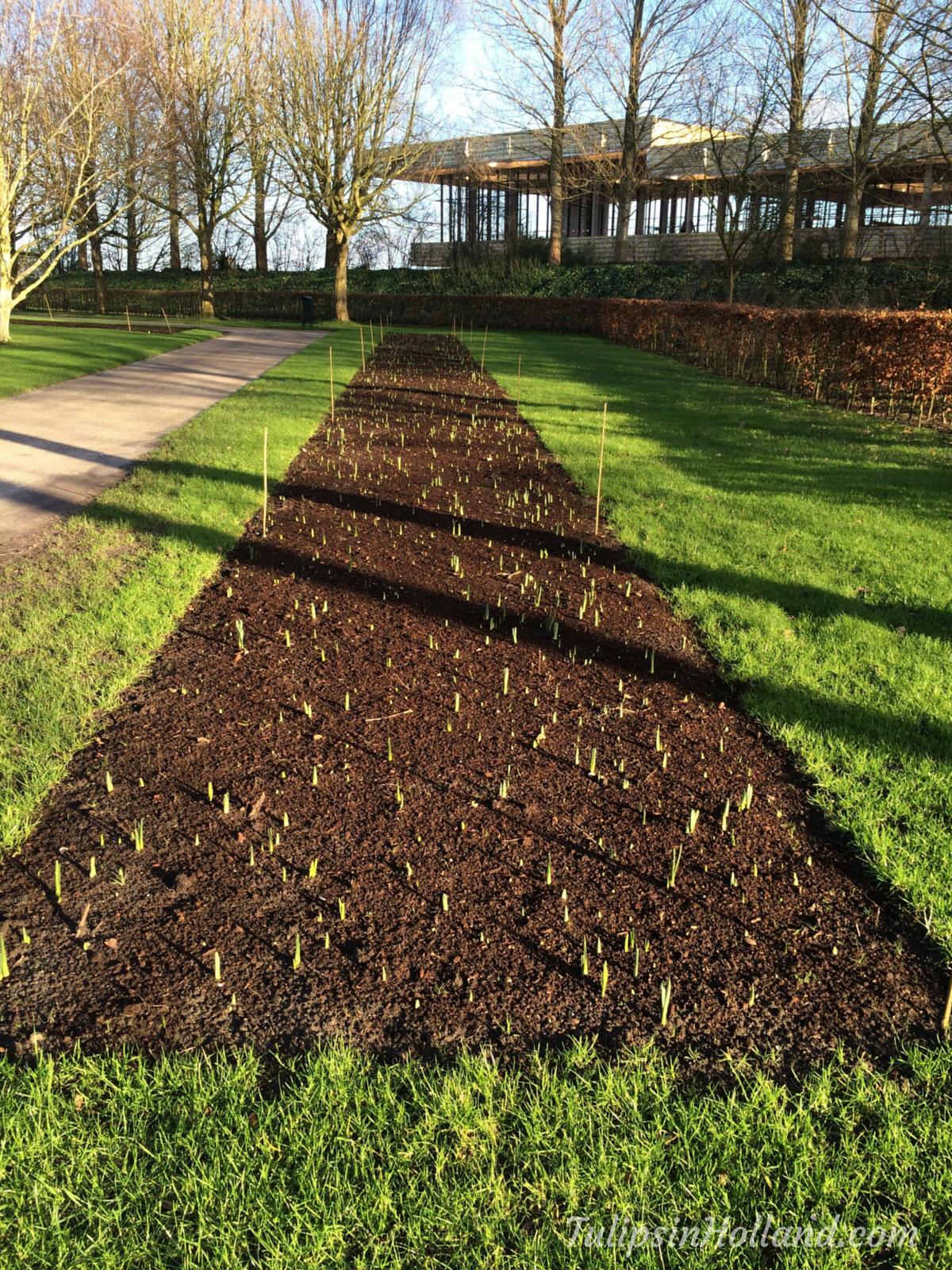 New Entrance Keukenhof 2017 - Tulips in Holland
