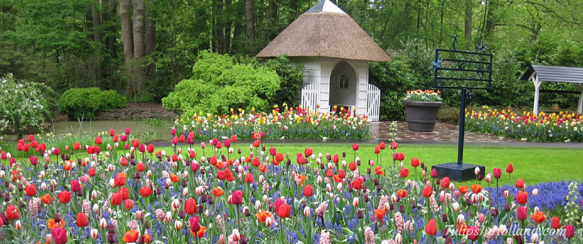 best tulip garden in holland garden ftempo. Black Bedroom Furniture Sets. Home Design Ideas