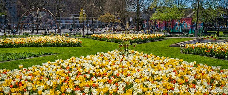 Amsterdam tulp festival