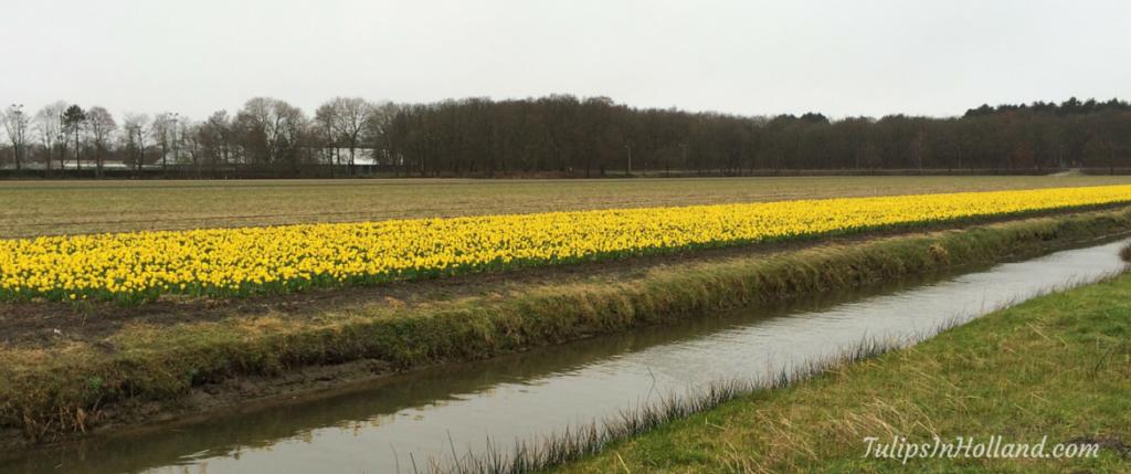 First flower field 2016