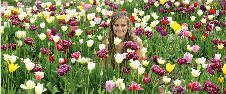 tulip route dronten