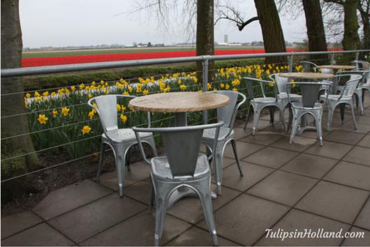 terrace at Keukenhof