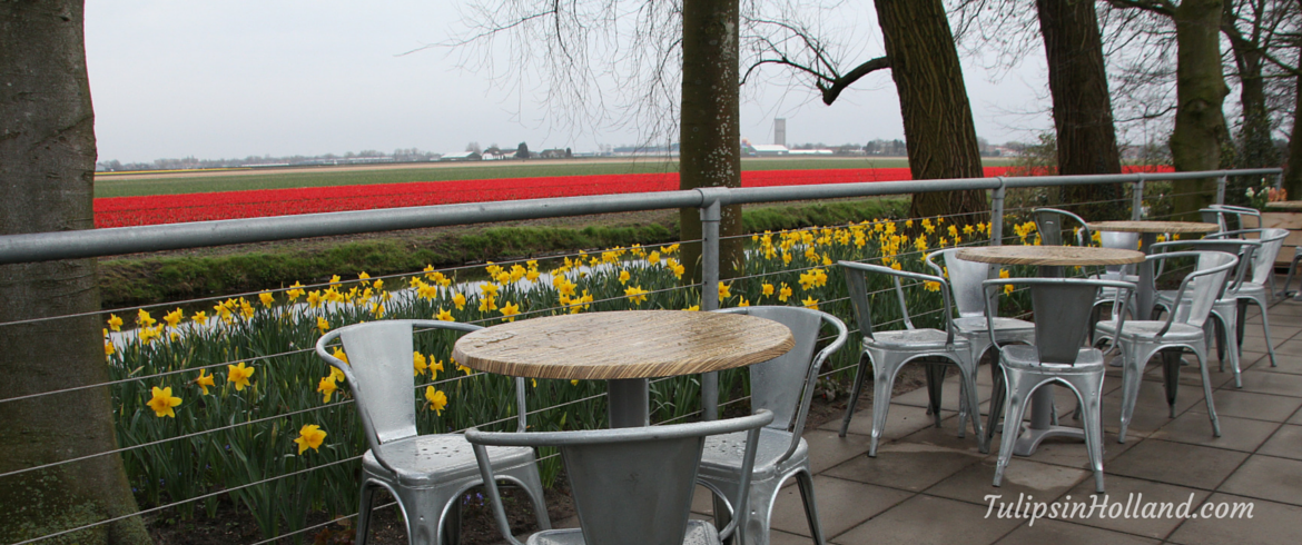 terrace and flowerfields