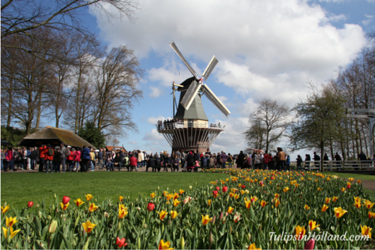 windmill with tulips