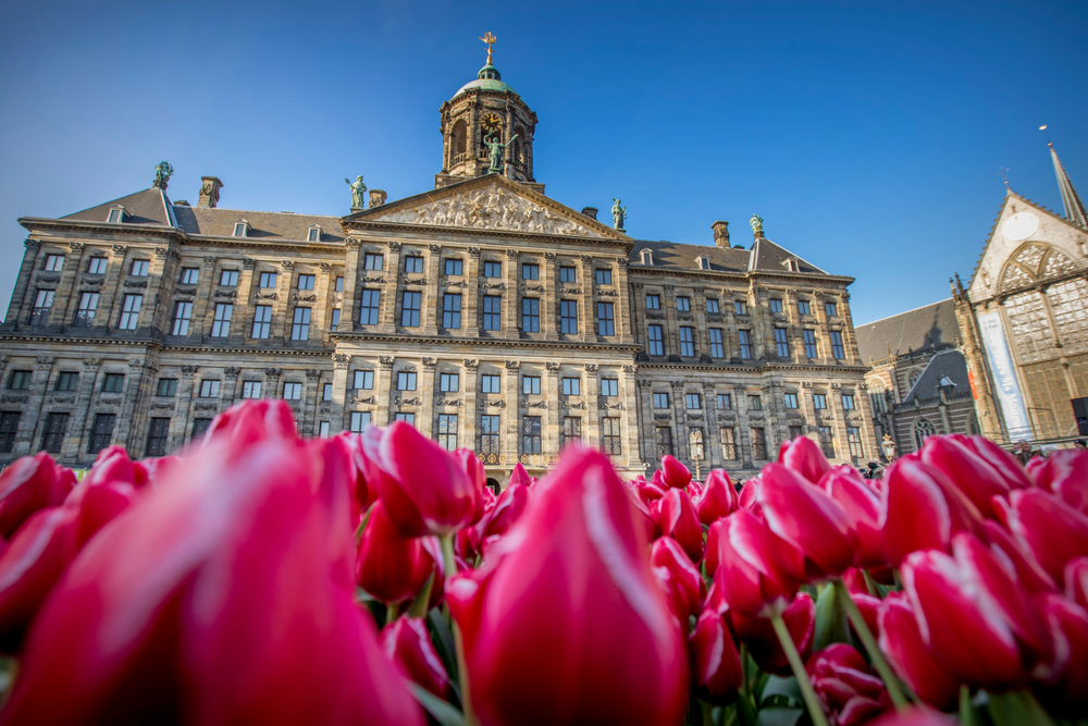 A tulip field in the front of the royal palace in Amsterdam. During The tulip season there are special tulip picking garden where people can pick tulips for free organised by Dutch tulip growers. There are more than 1.000 different kind tulips and some 1.7 billion Dutch tulips are expected to bring spring into homes around the world. Photo: Patrick van Katwijk
