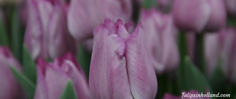 weekly flower update week 11