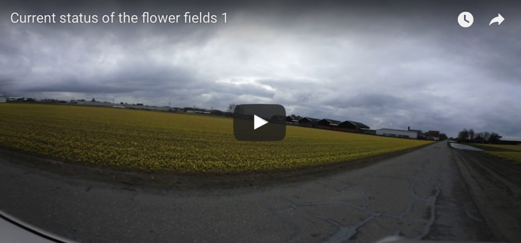 360 video current status of the flower fields 1