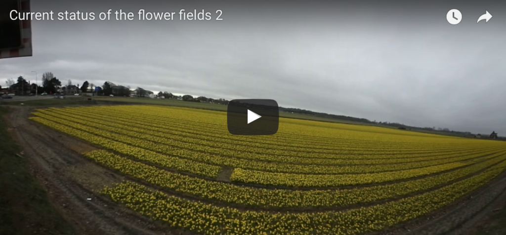 360 video current status of the flower fields 2