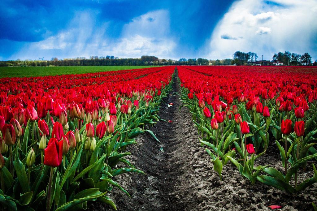 Tulip Route Dronten 2