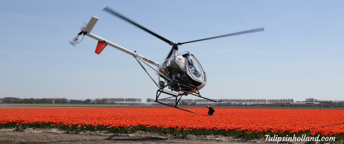 Tulip fields helicopter flight