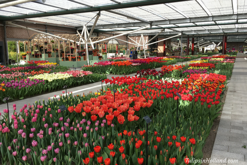 sneak preview Keukenhof 2017 4