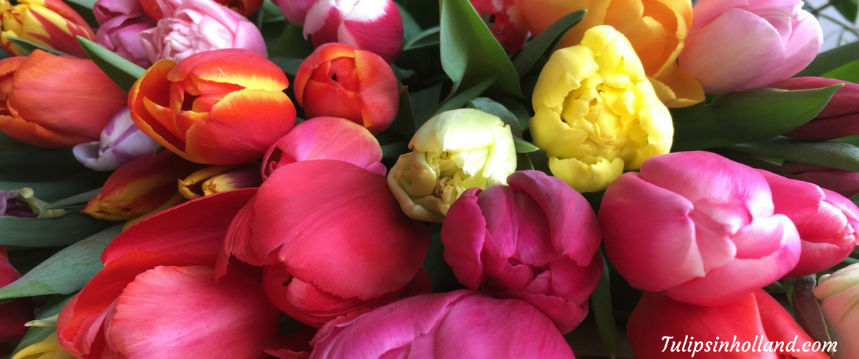 weekly_flower_update